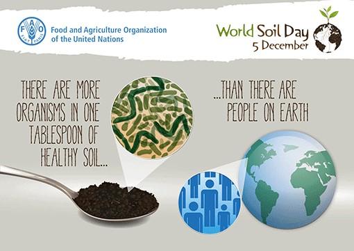 A talajlakó élőlények és szerepük